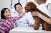 Hoe de behandeling van droge huid bij honden
