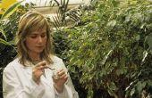 Hoeveel geld is een botanicus maken?