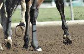 Hoe te genezen van een gebarsten paard hiel