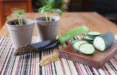 How to Grow komkommers met tomaat kooien