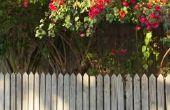Ben ik verantwoordelijk voor het trimmen van een buurman de boom Over mijn woning?