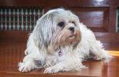 Wat rassen van honden blijven thuis Best?