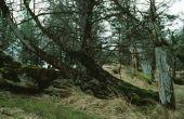 Zal boom wortels schade Gas lijnen?