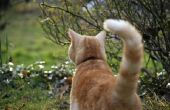 Hoe te behandelen een kat gebroken staart