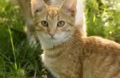 Verkleuring van de huid bij katten