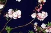 How to Save een zieke Crabapple boom