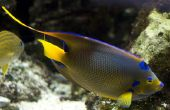 Uitscheidingsmechanisme systeem van zout Water vissen