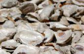 Virginia verordeningen voor oesters