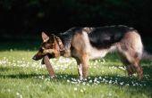 Ben ik aansprakelijk voor de beet van een hond aan een overtreder?