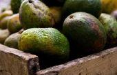 Hoe maak je een Avocado Soft