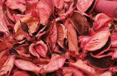 Bomen met roze Fall gebladerte & roze bladeren