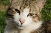 Wat gebeurt er als katten vlooien eten?