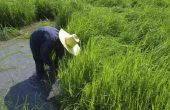Oude Chinese landbouwtechnieken