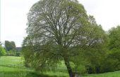 Hoe lang leeft een boom?