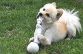 Hoe maak je zelfgemaakte hond kauwen speelgoed