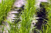 Soorten landbouw irrigatiesystemen