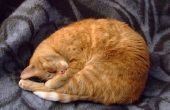 Voeding van een kat met nierfalen