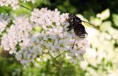 Hoe te identificeren vliegende insecten & kevers in Michigan