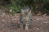 Hoe te verwijderen van Cat Urine geur van vuil
