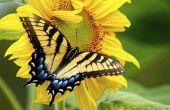 Bloemen die vlinders en kolibries aantrekken