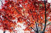 Planten & bomen die in Delaware State groeien