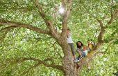 Hoe maak je je eigen boom kostuum voor kinderen