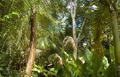 Lijst van bloemen gevonden in het tropisch regenwoud