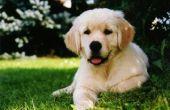 Over de teller Allergie medicijnen voor honden
