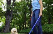 Cures voor zachte ontlasting hond.