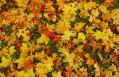 Verhoogde bruin terpen over de ruggen van bladeren