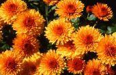 Val & Winter bloemen in Noord-Texas