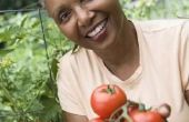 Hoe kan in blokjes gesneden tomaten