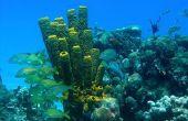 Planten in een koraalrif