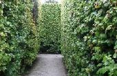 Het beste Type van groenblijvende Privacy Hedge