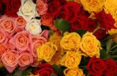 Hoe te noemen een roos voor iemand speciaal