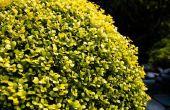 Struiken die in gedeeltelijke zon & gedeeltelijke schaduw groeien kunnen