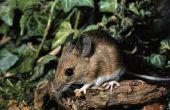 Chemische stoffen die muizen doden