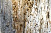 Natuurlijke manieren om af te weren van termieten