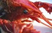 Hoe lang kunnen kreeften verbleven uit het Water voordat ze slecht zijn te eten?