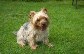 Goedaardige lever tumoren bij honden