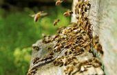 Soorten stekende vliegende insecten