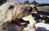 Hoe maak je een hond hangmat voor de achterbank van een voertuig
