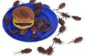 Is het OK om vacuüm dode kakkerlakken?
