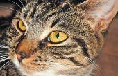 Vestibulair syndroom bij katten