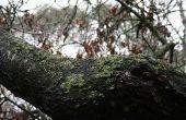 Wildlife planten die nuttig voor de dieren van het bos zijn