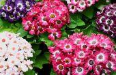 Hoe ontwerp je een Plant kwekerij