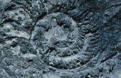 Welke verschillende soorten fossielen zijn er?