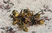 How to Kill vliegende insecten
