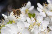 De beste bloemen voor bijen