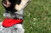 Hoe te maken van een hond de kraag Bandana